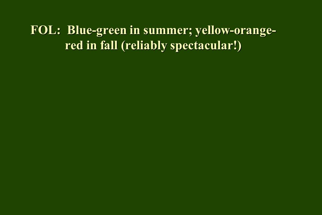 FOL: Blue-green in summer; yellow-orange- red in fall (reliably spectacular!)