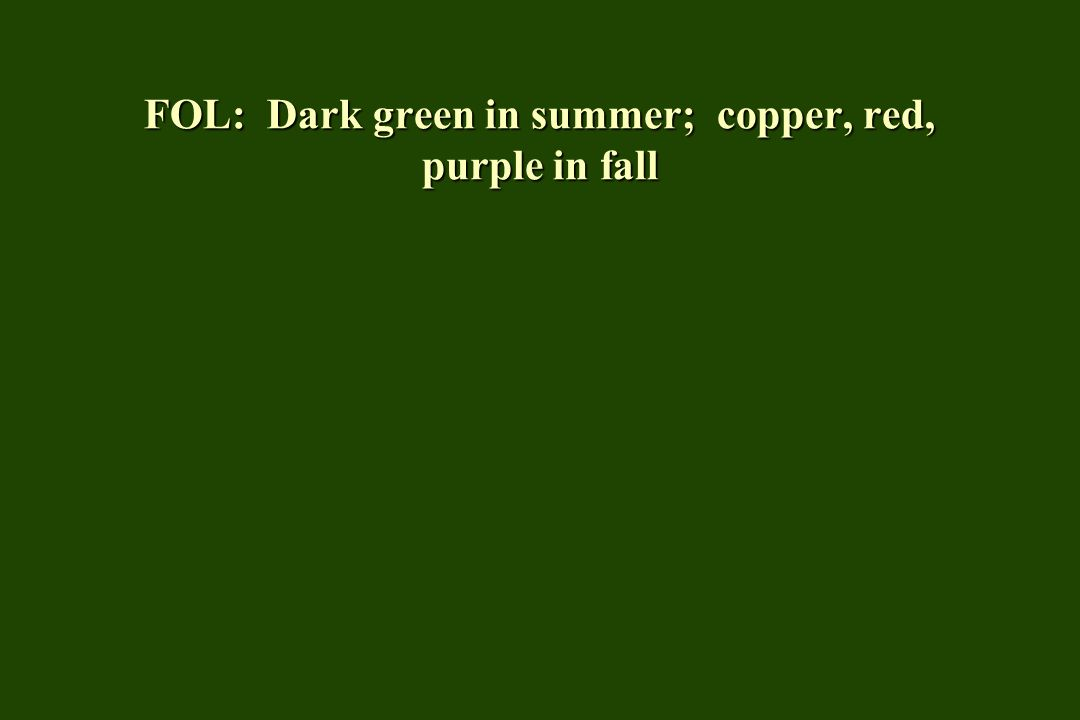 FOL: Dark green in summer; copper, red, purple in fall