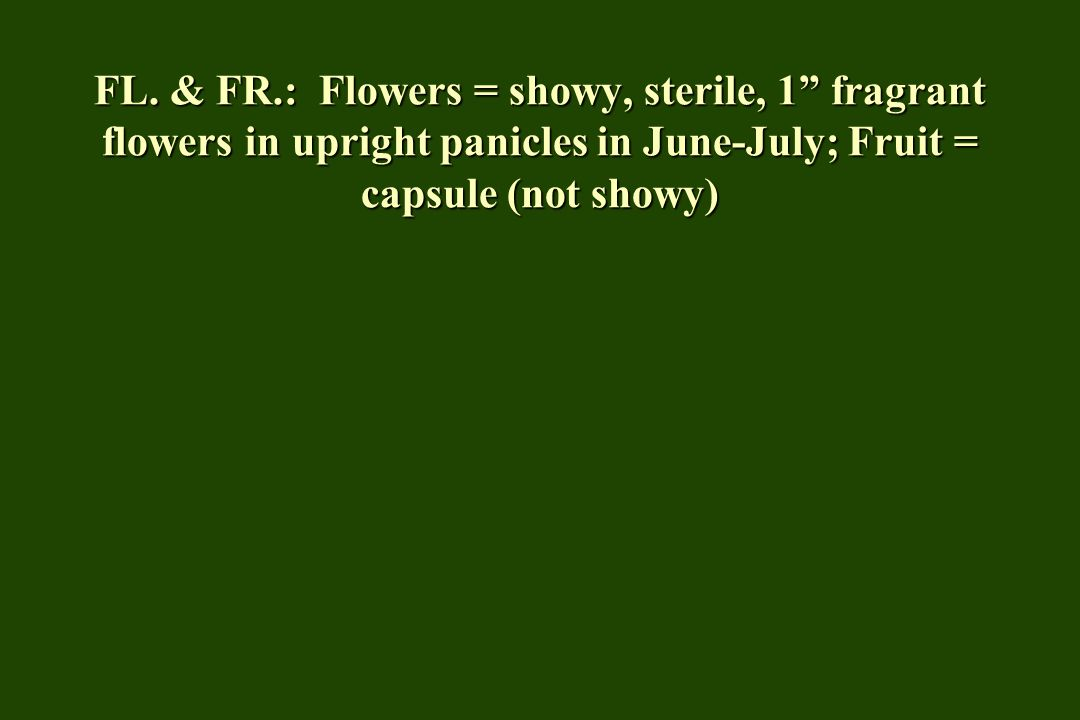 "FL. & FR.: Flowers = showy, sterile, 1"" fragrant flowers in upright panicles in June-July; Fruit = capsule (not showy)"