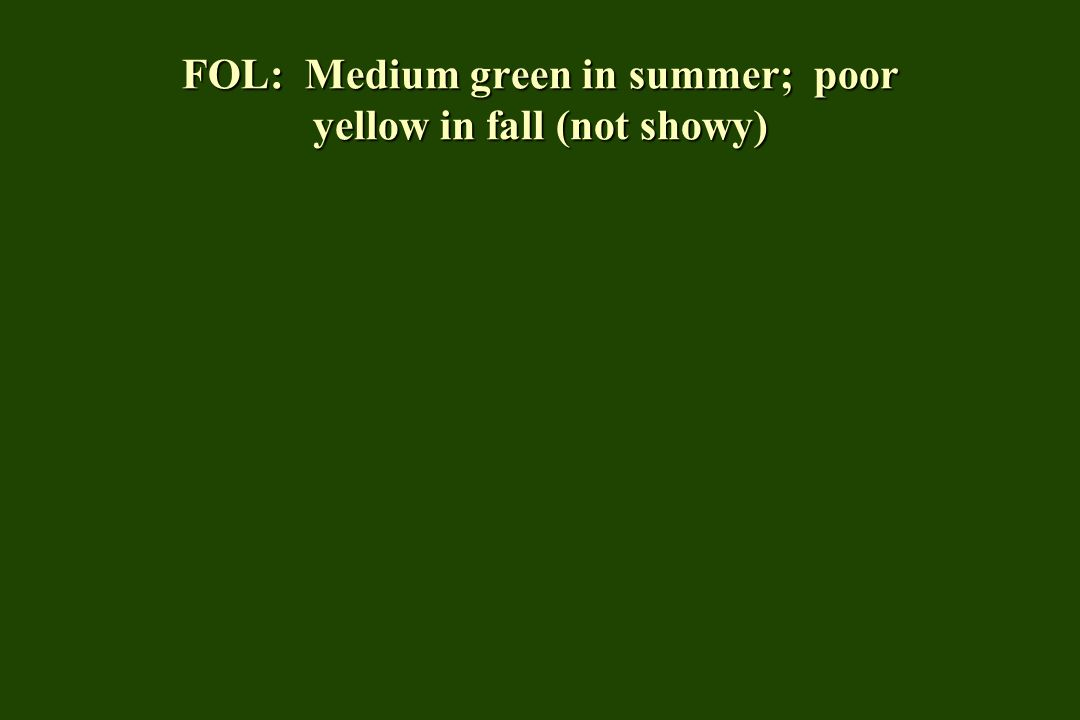 FOL: Medium green in summer; poor yellow in fall (not showy)