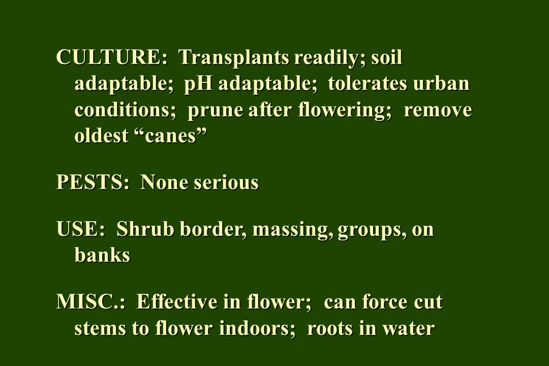 CULTURE: Transplants readily; soil adaptable; pH adaptable; tolerates urban conditions; prune after flowering; remove oldest canes PESTS: None serious USE: Shrub border, massing, groups, on banks MISC.: Effective in flower; can force cut stems to flower indoors; roots in water