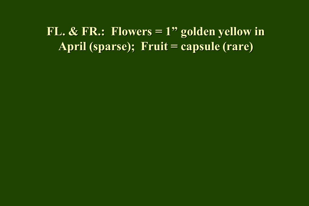 FL. & FR.: Flowers = 1 golden yellow in April (sparse); Fruit = capsule (rare)