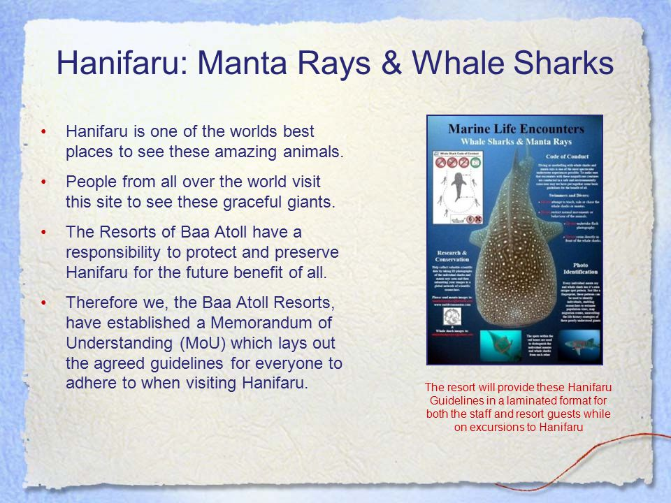 Hanifaru: Manta Rays & Whale Sharks Hanifaru is one of the worlds best places to see these amazing animals.
