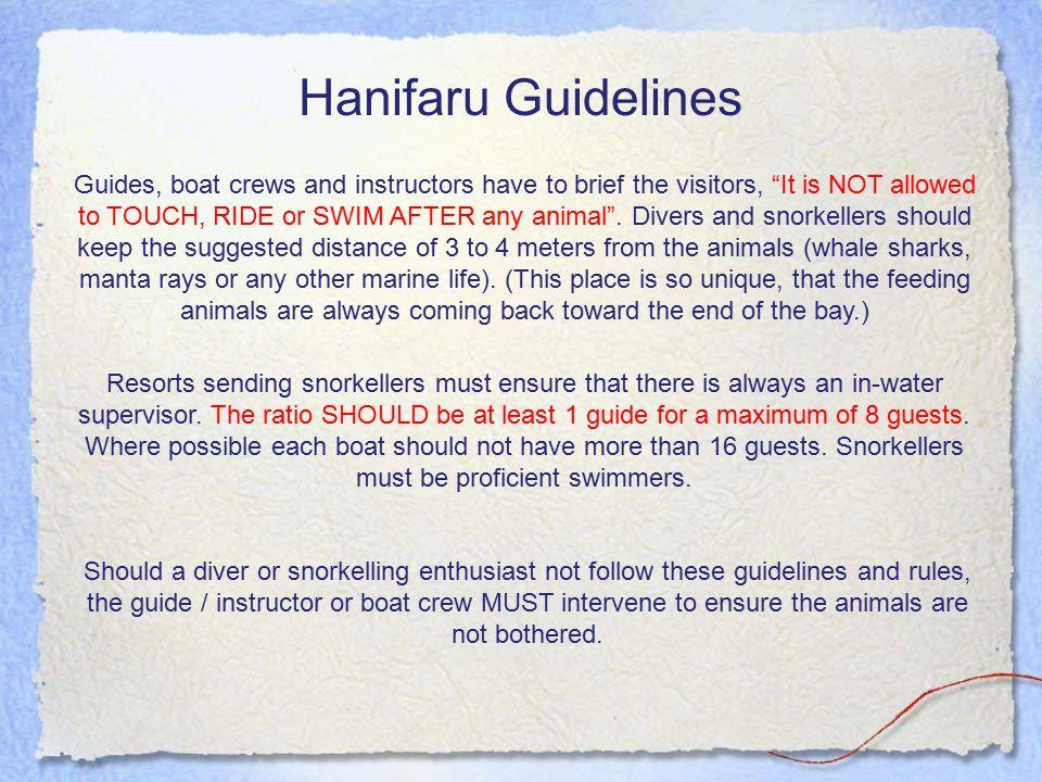 Hanifaru Guidelines Resorts sending snorkellers must ensure that there is always an in-water supervisor.