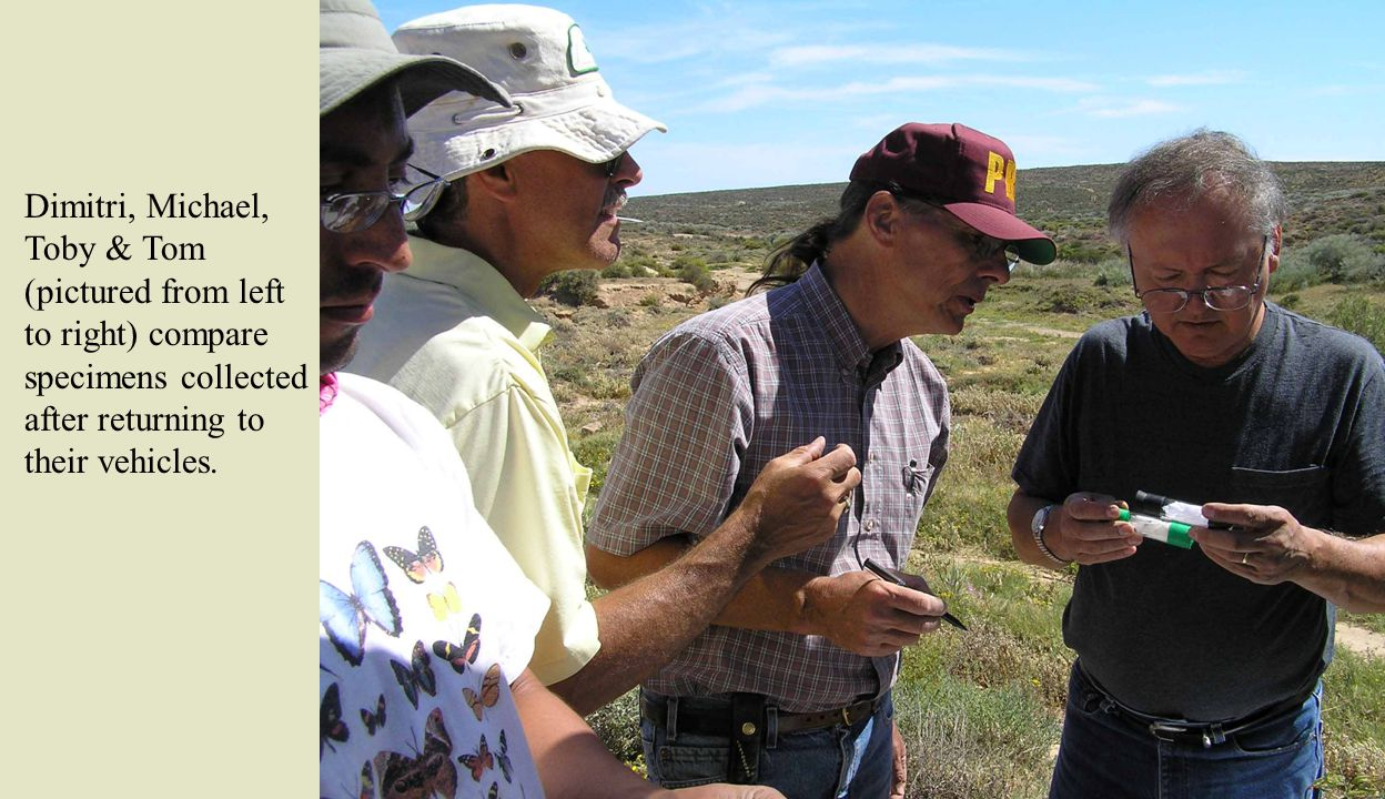Dimitri, Michael, Toby & Tom (pictured from left to right) compare specimens collected after returning to their vehicles.