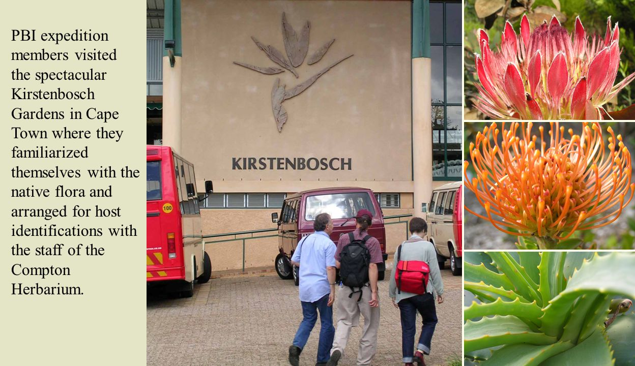 PBI expedition members visited the spectacular Kirstenbosch Gardens in Cape Town where they familiarized themselves with the native flora and arranged for host identifications with the staff of the Compton Herbarium.