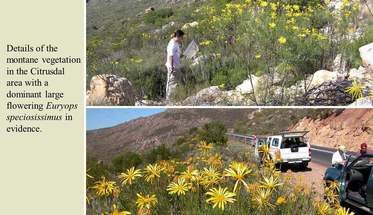 Tom collecting on native vegetation north east of Port Nolloth on the road to Lekkersing, northernmost Namaqualand.