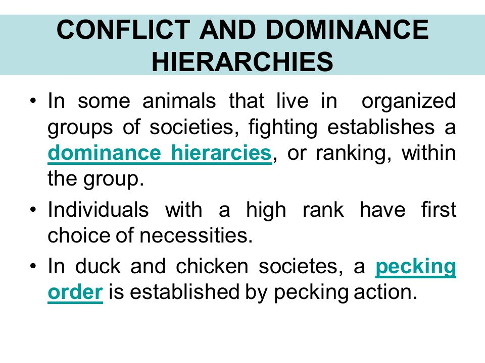 CONFLICT AND DOMINANCE HIERARCHIES In some animals that live in organized groups of societies, fighting establishes a dominance hierarcies, or ranking, within the group.
