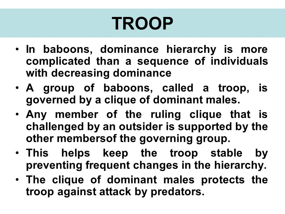 In baboons, dominance hierarchy is more complicated than a sequence of individuals with decreasing dominance A group of baboons, called a troop, is governed by a clique of dominant males.