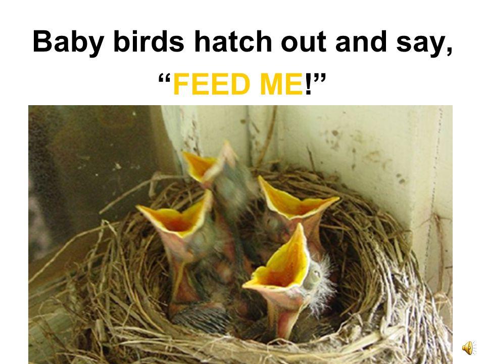 Birds lay eggs.