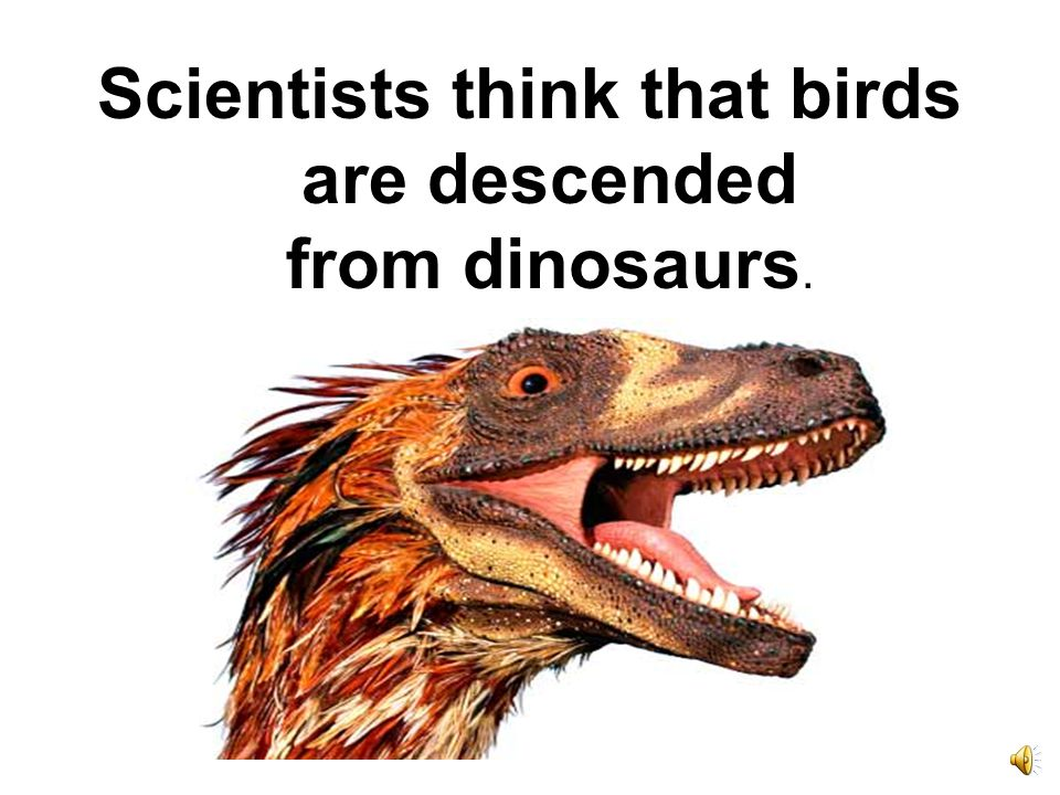 Birds first took to the air 150 million years ago.