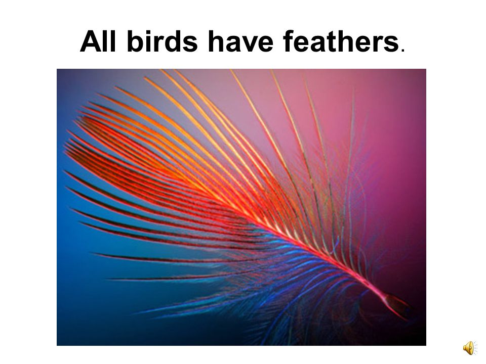 All birds have feathers.
