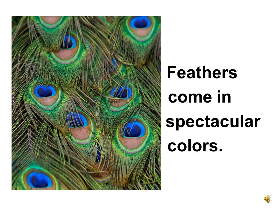 Feathers come in spectacular colors.