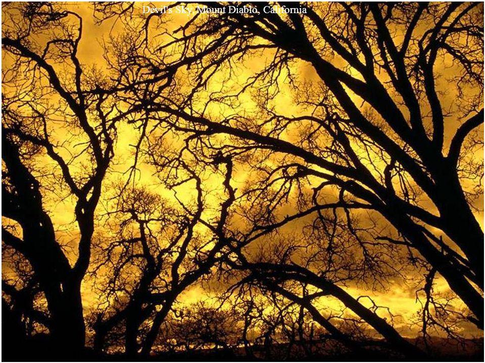 Mystic Sunbeams, Olympic National Park, Washington
