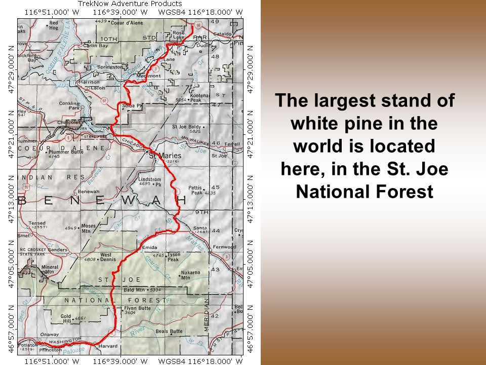 The largest stand of white pine in the world is located here, in the St. Joe National Forest
