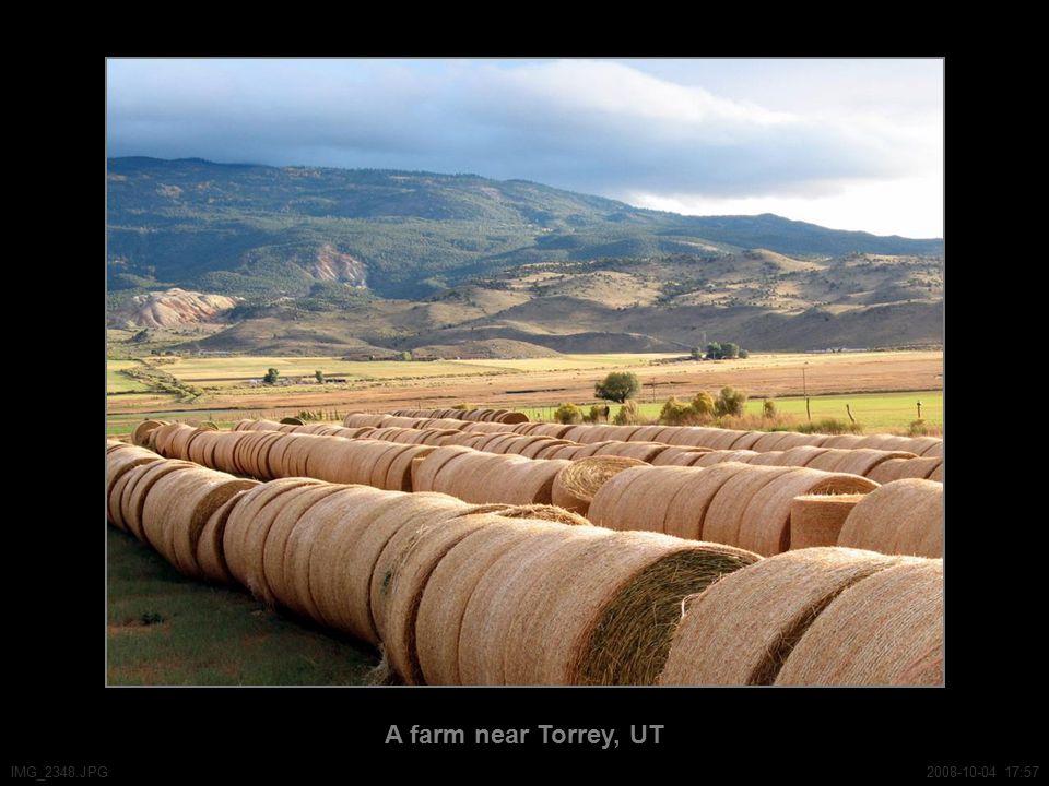 A farm near Torrey, UT IMG_2348.JPG2008-10-04 17:57