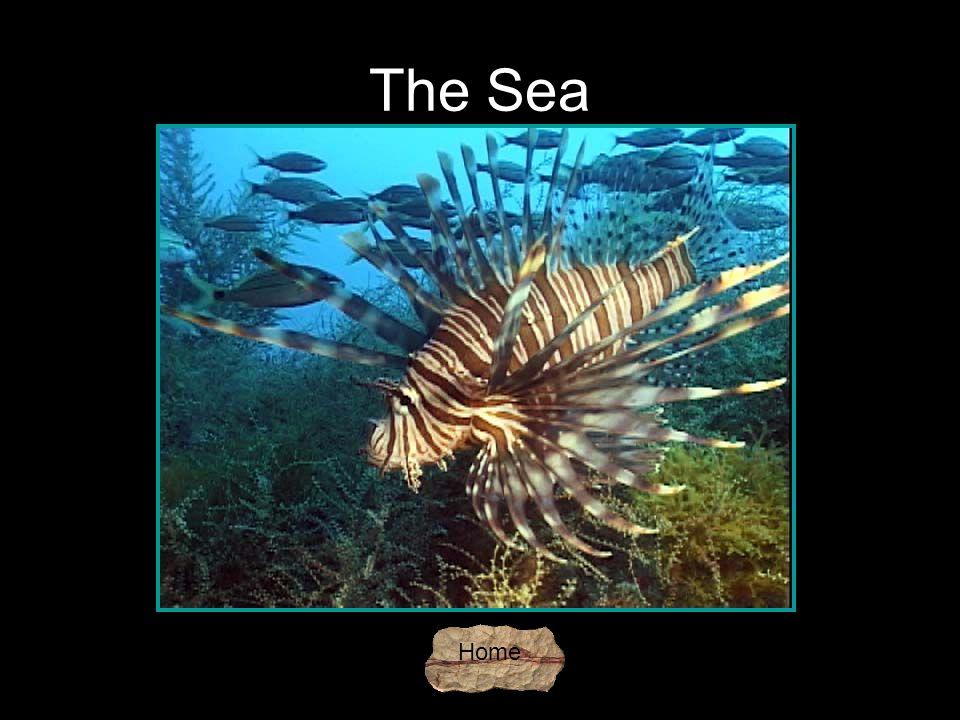 The Sea Home