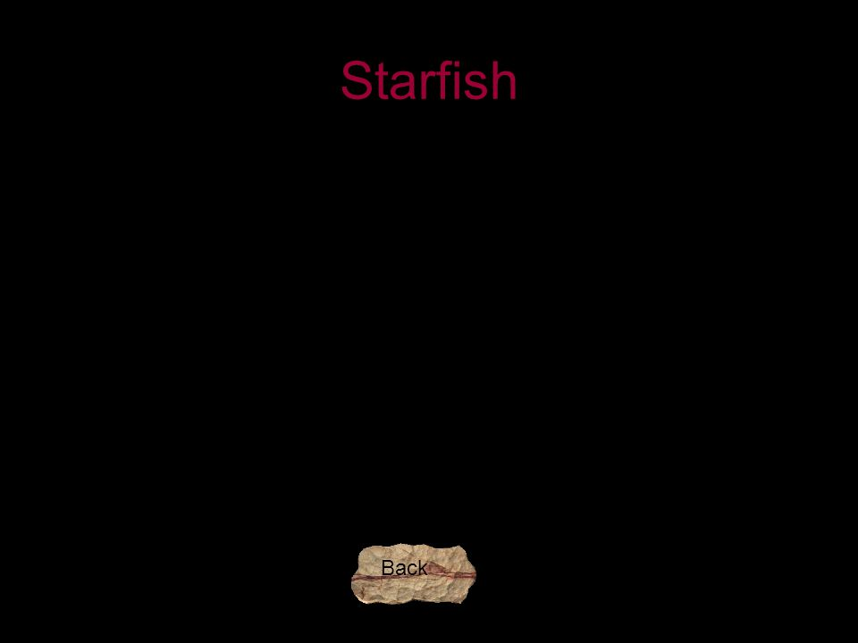 Starfish Back