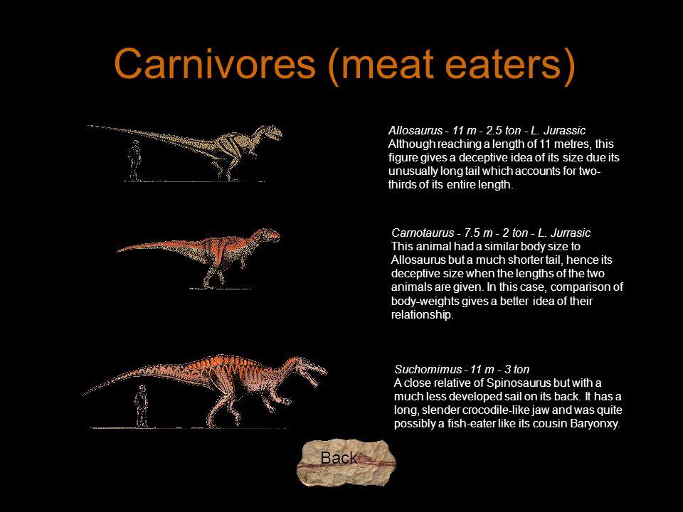 Carnivores (meat eaters) Allosaurus - 11 m - 2.5 ton - L.