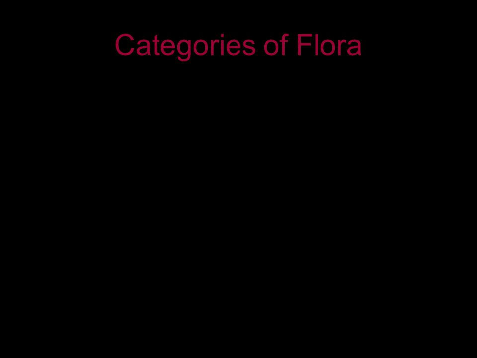 Categories of Flora