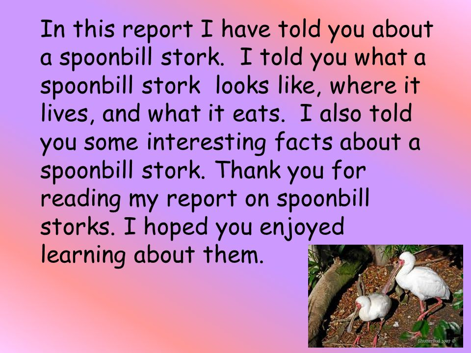 In this report I have told you about a spoonbill stork.