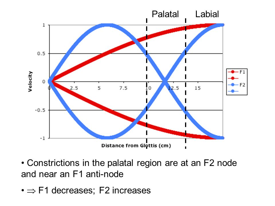 Labial Constrictions in the labial region are at anti-nodes for both F1 and F2.