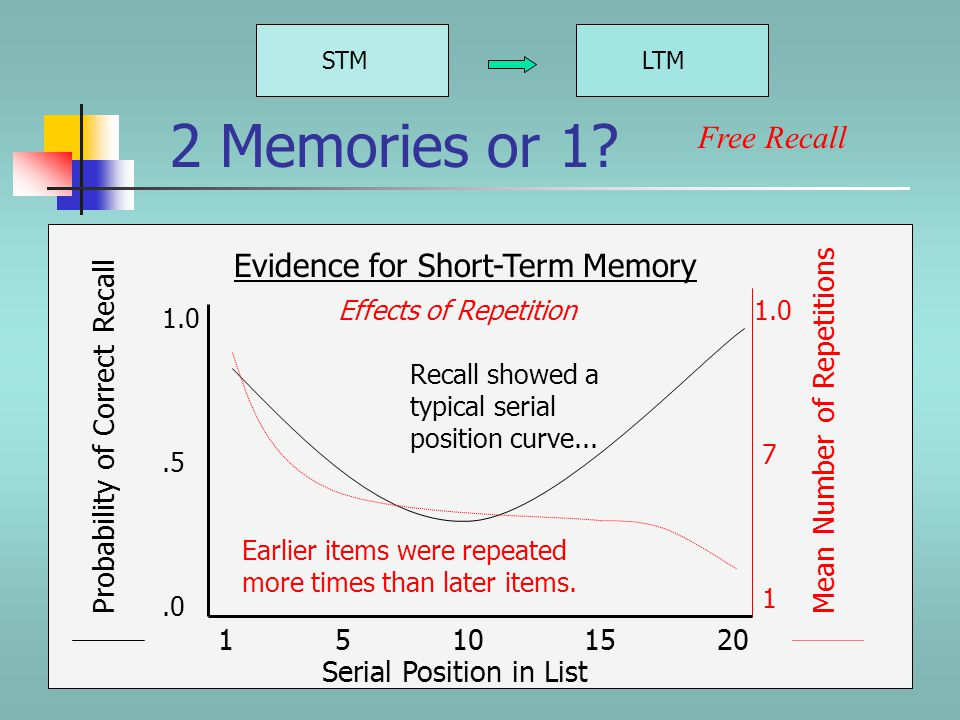 STMLTM Evidence for Short-Term Memory Free Recall According to the Atkinson-Shiffrin model, the more times you repeat something, the more likely it is you will transfer it from short-term to long-term memory.
