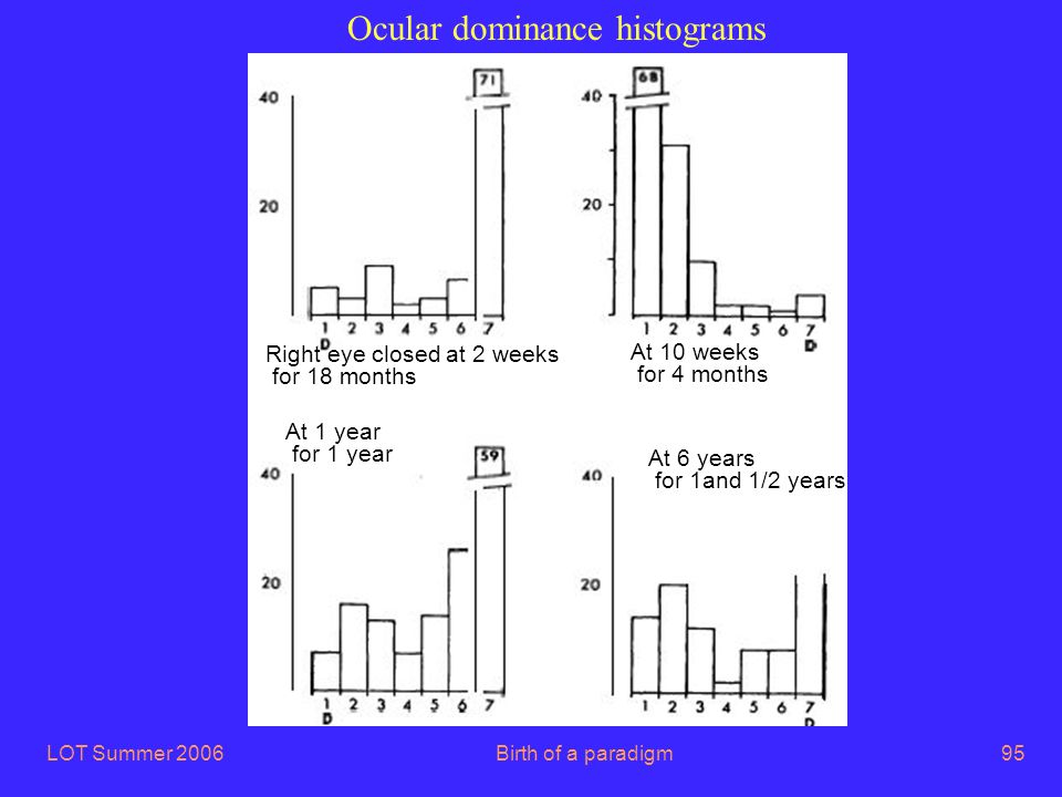 LOT Summer 2006Birth of a paradigm95 Ocular dominance histograms Right eye closed at 2 weeks for 18 months At 10 weeks for 4 months At 1 year for 1 ye