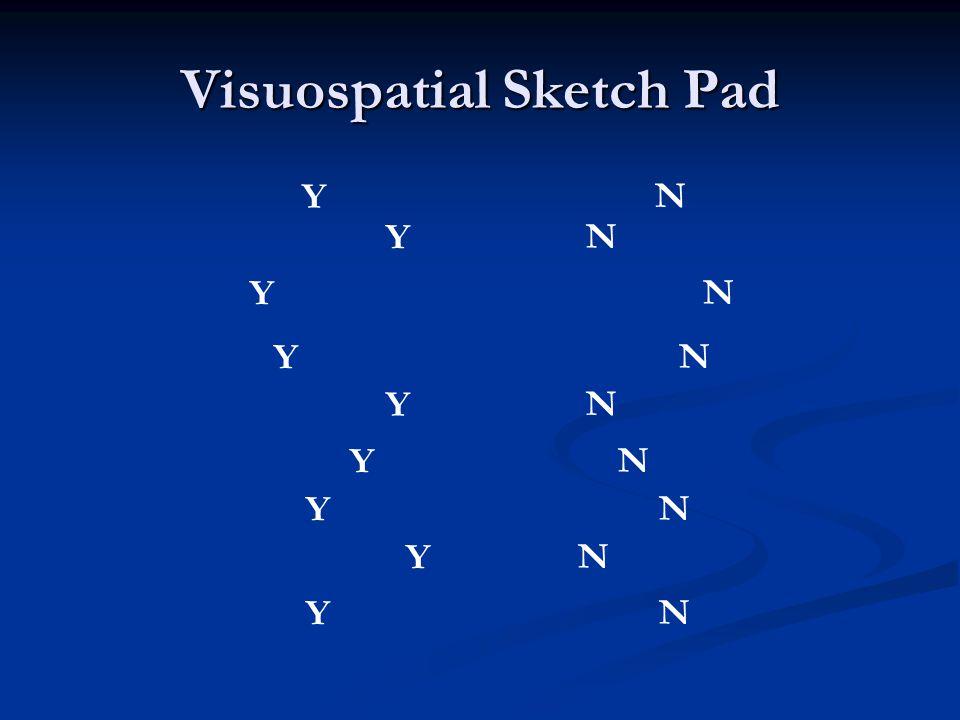 Visuospatial Sketch Pad Y N Y N Y N Y N Y N Y N Y N Y N Y N