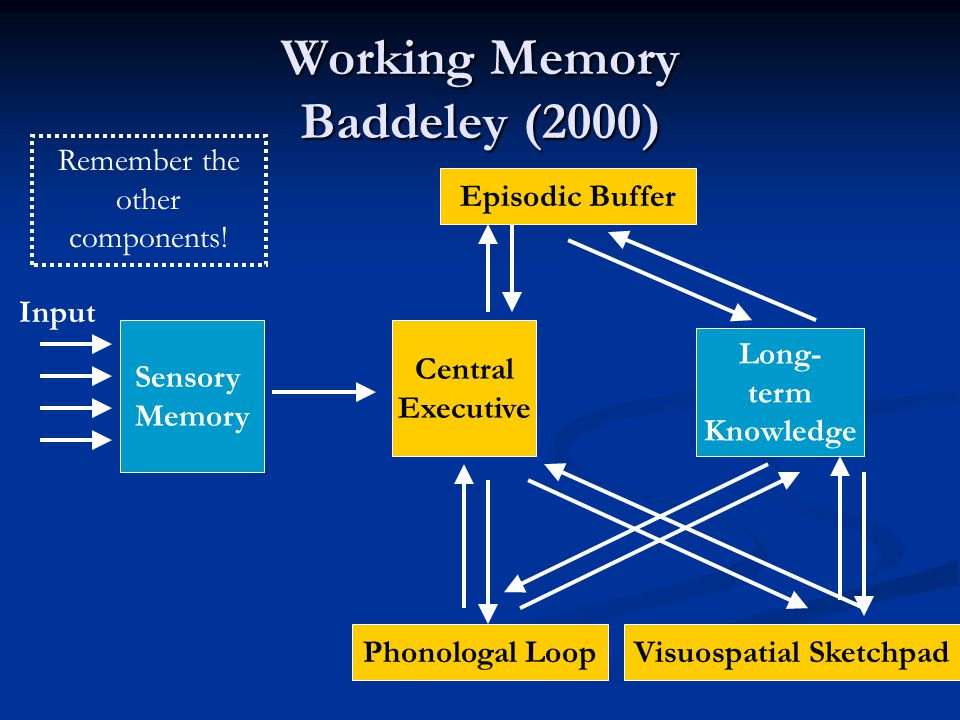 Working Memory Baddeley (2000) Sensory Memory Long- term Knowledge Input Central Executive Phonologal LoopVisuospatial Sketchpad Episodic Buffer Remember the other components!