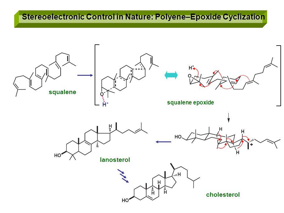 Stereoelectronic Control in Nature: Polyene–Epoxide Cyclization squalene squalene epoxide lanosterol cholesterol H+H+