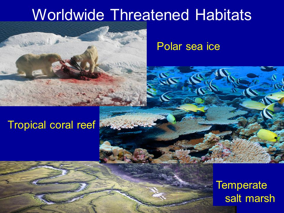 Worldwide Threatened Habitats Polar sea ice Temperate salt marsh Tropical coral reef