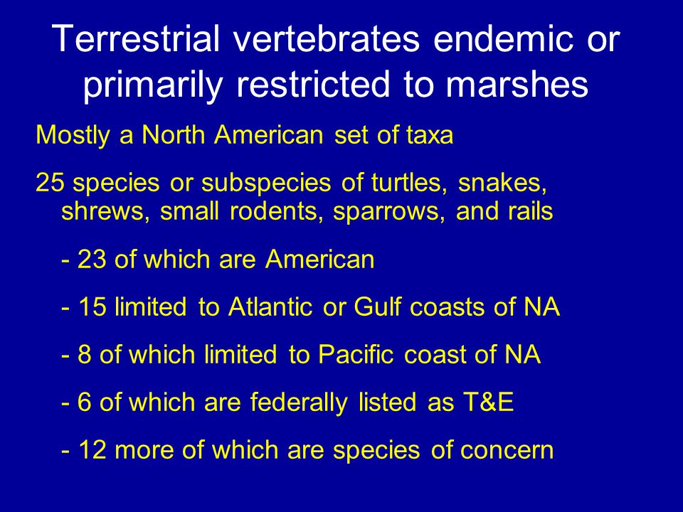 Terrestrial vertebrates endemic or primarily restricted to marshes Mostly a North American set of taxa 25 species or subspecies of turtles, snakes, sh