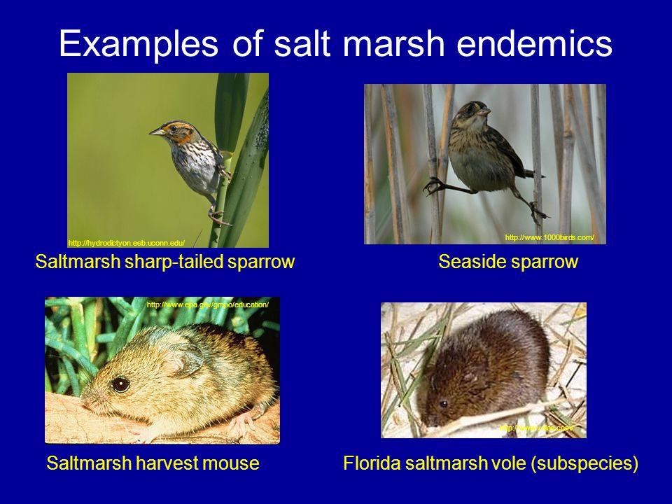 Examples of salt marsh endemics Saltmarsh harvest mouse Saltmarsh sharp-tailed sparrowSeaside sparrow Florida saltmarsh vole (subspecies) http://www.1