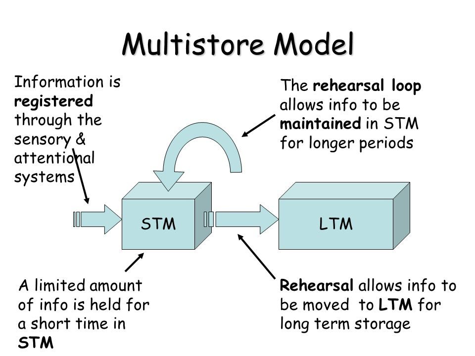 Multistore Model Information is registered through the sensory & attentional systems STM A limited amount of info is held for a short time in STM The rehearsal loop allows info to be maintained in STM for longer periods LTM Rehearsal allows info to be moved to LTM for long term storage