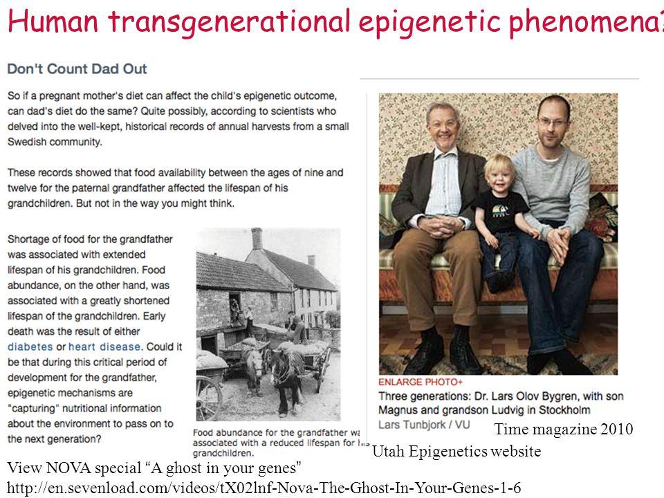 Human transgenerational epigenetic phenomena.