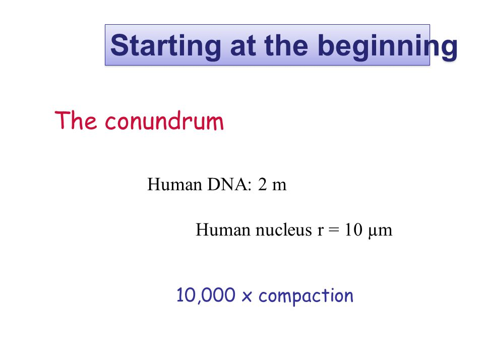 The conundrum Human DNA: 2 m Human nucleus r = 10 µm 10,000 x compaction Starting at the beginning