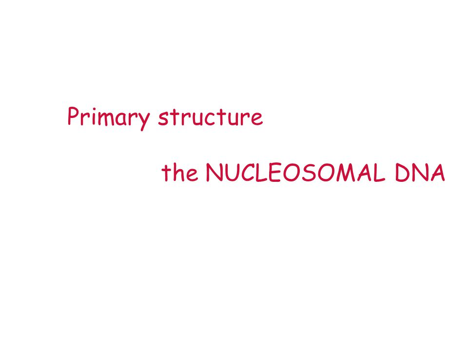 Primary structure the NUCLEOSOMAL DNA
