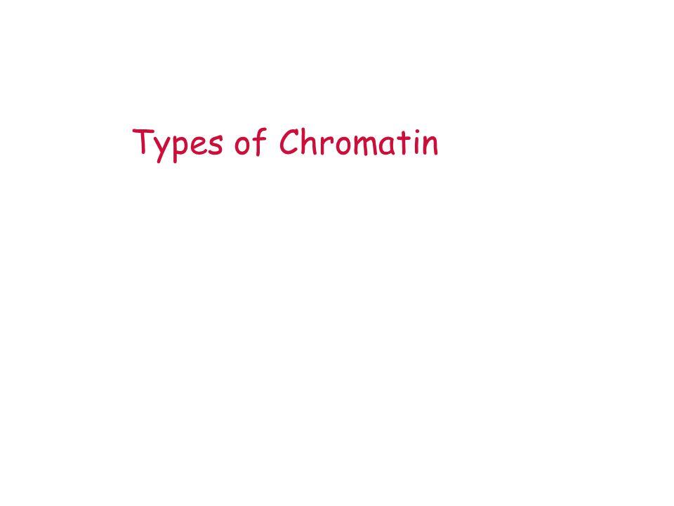Types of Chromatin