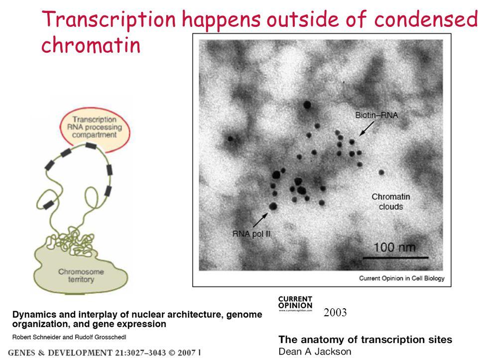 Transcription happens outside of condensed chromatin