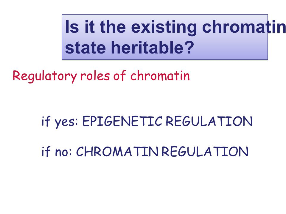 Regulatory roles of chromatin if yes: EPIGENETIC REGULATION if no: CHROMATIN REGULATION Is it the existing chromatin state heritable.