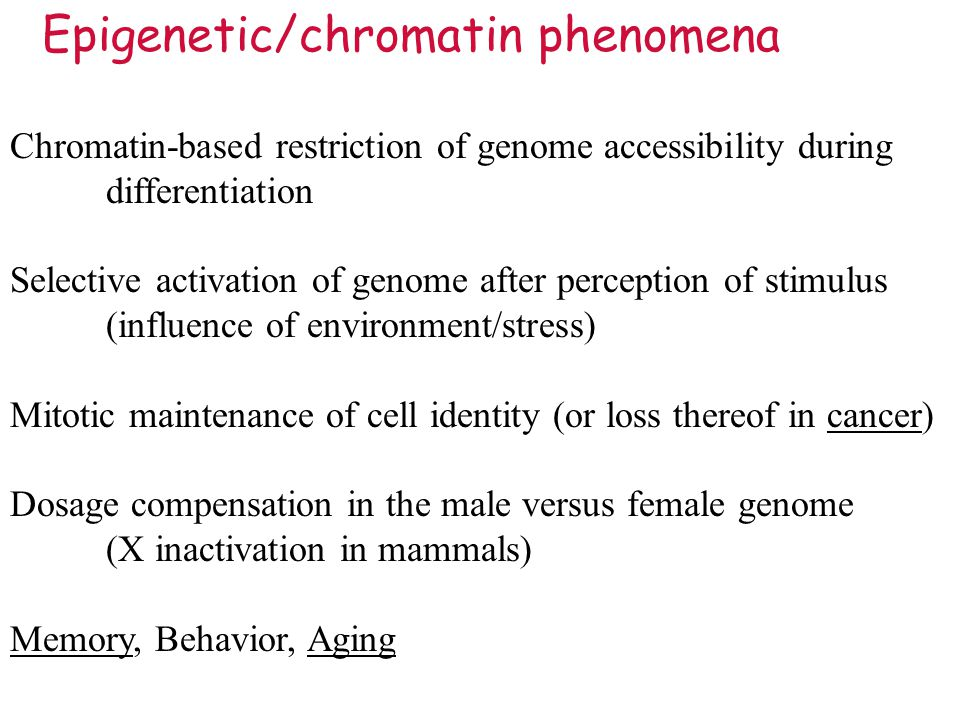 Chromatin-based restriction of genome accessibility during differentiation Selective activation of genome after perception of stimulus (influence of environment/stress) Mitotic maintenance of cell identity (or loss thereof in cancer) Dosage compensation in the male versus female genome (X inactivation in mammals) Memory, Behavior, Aging Epigenetic/chromatin phenomena