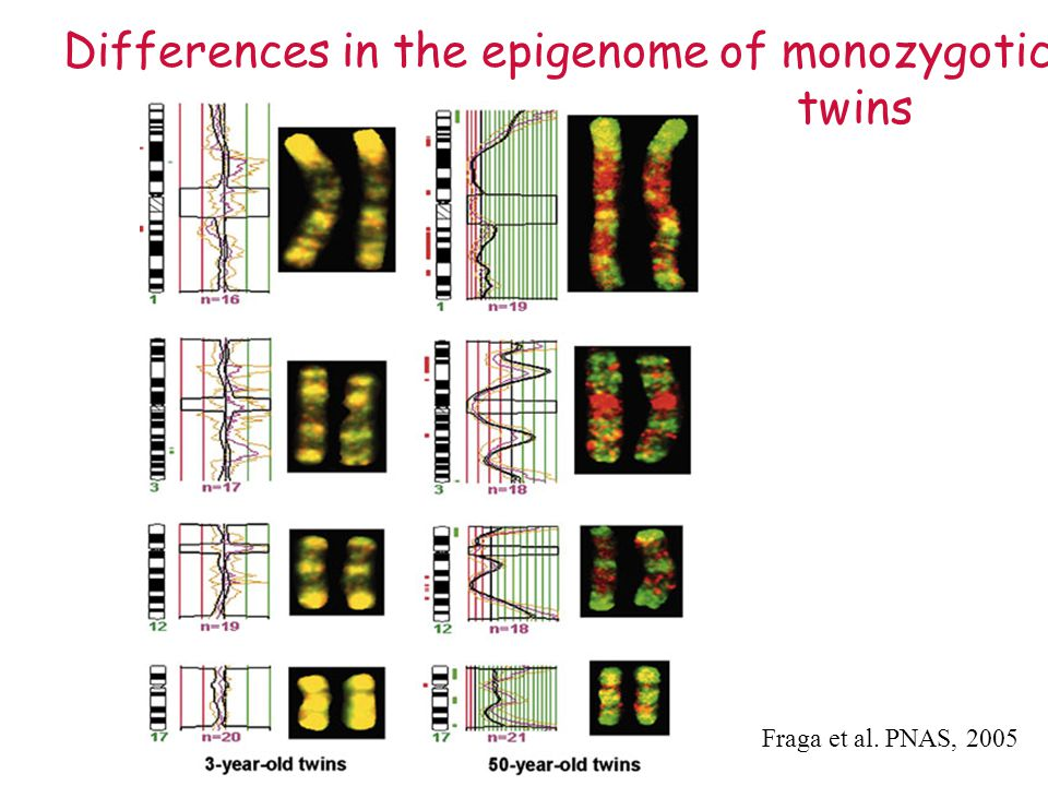 Differences in the epigenome of monozygotic twins Fraga et al. PNAS, 2005