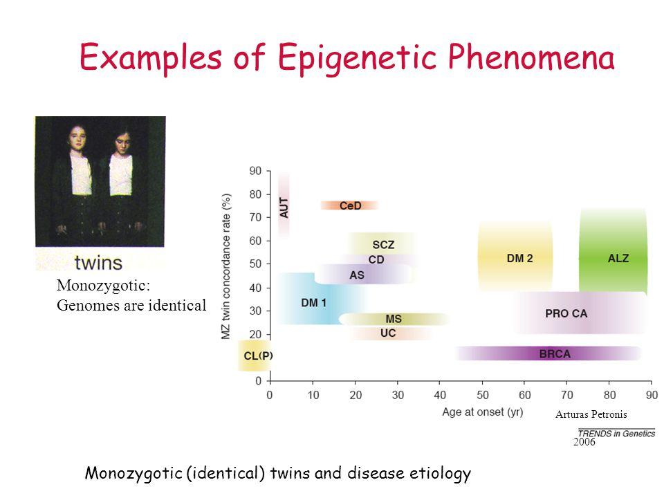 Examples of Epigenetic Phenomena Monozygotic (identical) twins and disease etiology Arturas Petronis 2006 Monozygotic: Genomes are identical
