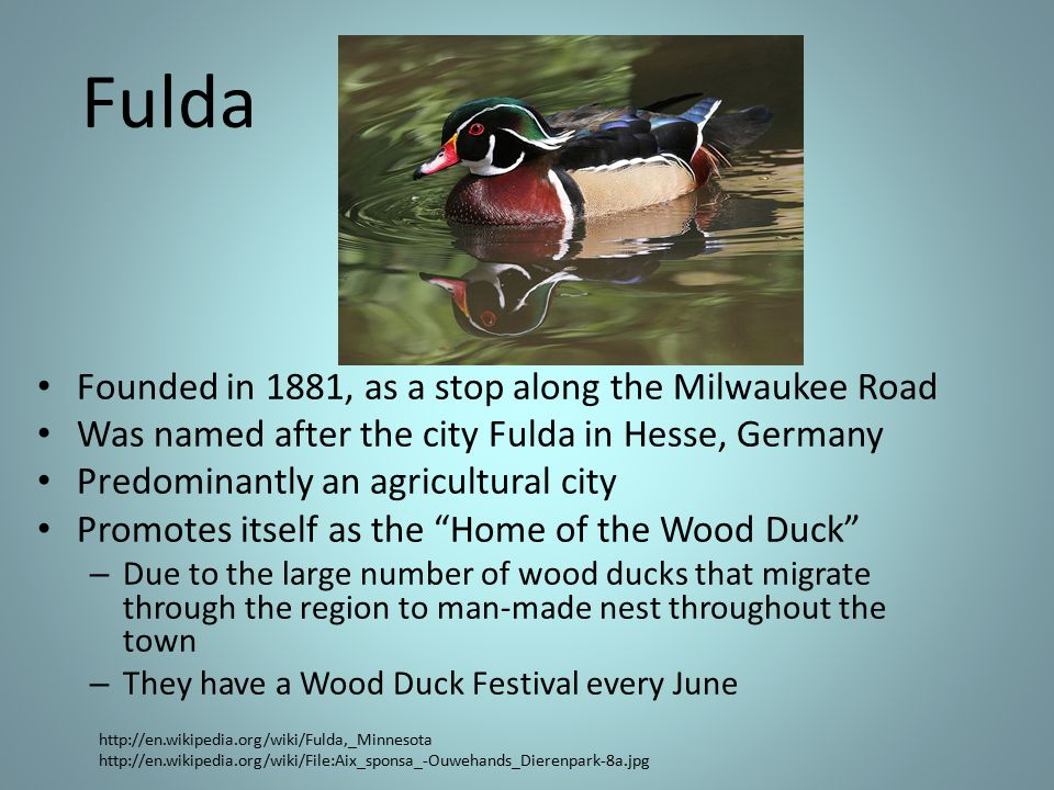 Fulda Founded in 1881, as a stop along the Milwaukee Road Was named after the city Fulda in Hesse, Germany Predominantly an agricultural city Promotes itself as the Home of the Wood Duck – Due to the large number of wood ducks that migrate through the region to man-made nest throughout the town – They have a Wood Duck Festival every June http://en.wikipedia.org/wiki/Fulda,_Minnesota http://en.wikipedia.org/wiki/File:Aix_sponsa_-Ouwehands_Dierenpark-8a.jpg