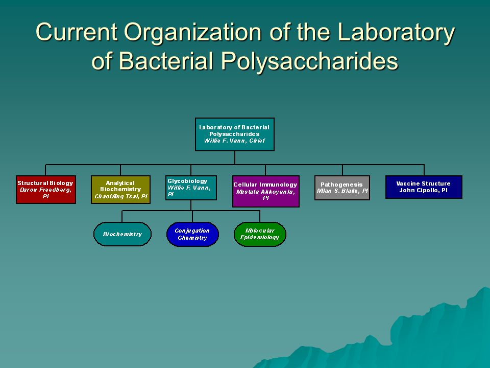Current Organization of the Laboratory of Bacterial Polysaccharides