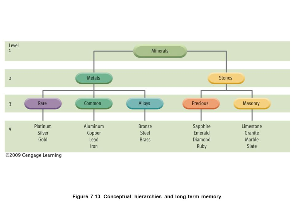 Figure 7.13 Conceptual hierarchies and long-term memory.