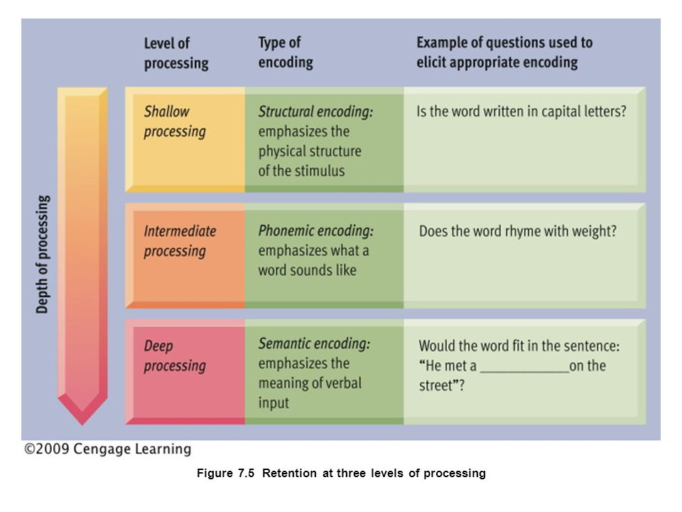 How is Knowledge Represented and Organized in Memory.