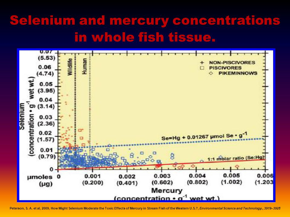 Selenium and mercury concentrations in whole fish tissue.