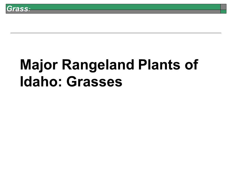 Grass : Major Rangeland Plants of Idaho:Grasses
